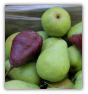 10 LBS. WASHINGTON STATE PEARS  IN A GIFT BOX INCLUDES 3 DAY SHIPPING