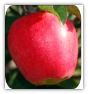 20 LBS.  WASHINGTON STATE APPLES IN A GIFT BOX PRICE INCLUDES 3 DAY SHIPPING